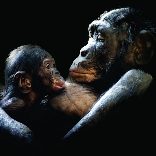 Placa Decorativa Mãe e Filhote Macaco