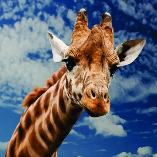 Placa Decorativa Uma Girafa