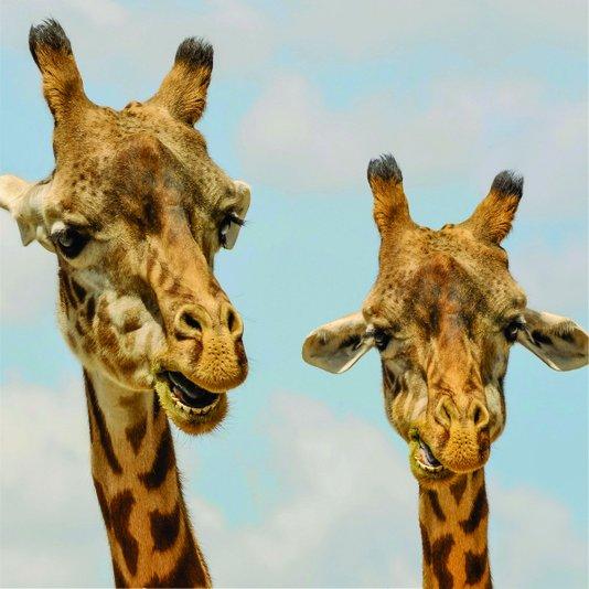 Placa Decorativa Girafas