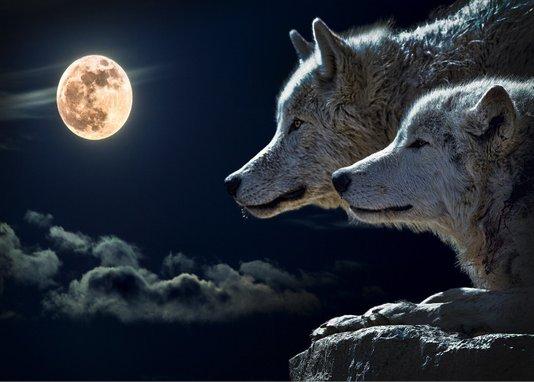Placa Decorativa Lobos no Luar