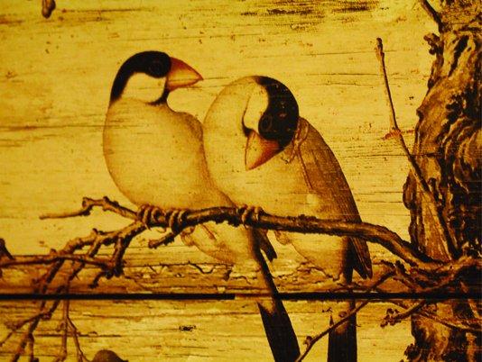 Placa Decorativa Pássaros