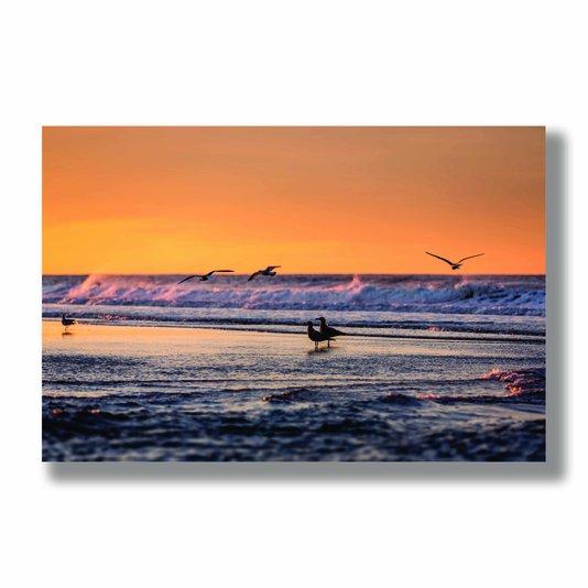Placa Decorativa Coleção Mar Pássaros A Beira Mar