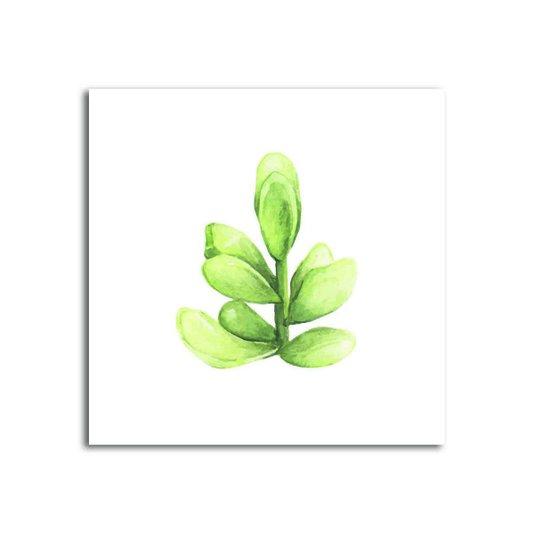 Placa Decorativa Planta Suculenta fundo Branco