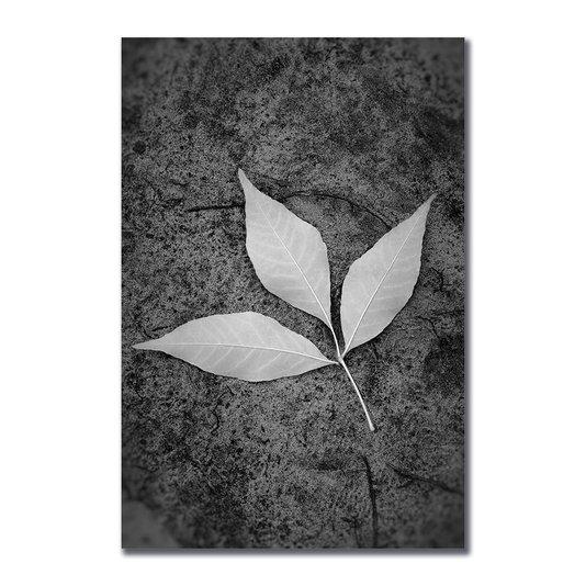 Placa Decorativa Preto e Branco Folha ao Chão
