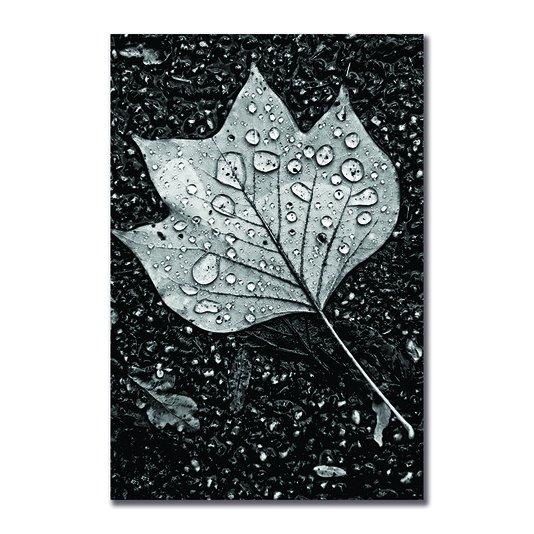 Placa Decorativa Preto e Branco Folha de Outono com Gotas