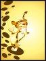 Placa Decorativa Infantil  Tigre