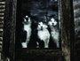 Placa Decorativa Gatos na Janela