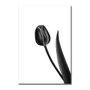 Placa Decorativa Preto e Branco Tulipa